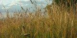 Trockengras