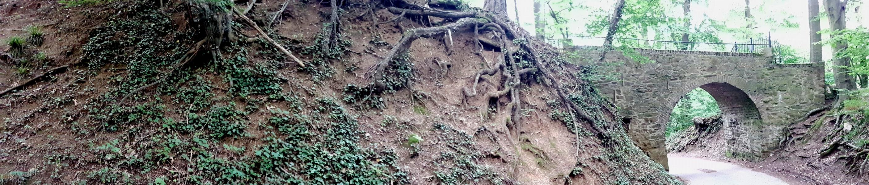 Vorbei an alten Bäumen mit ausgeprägten Wurzeln.