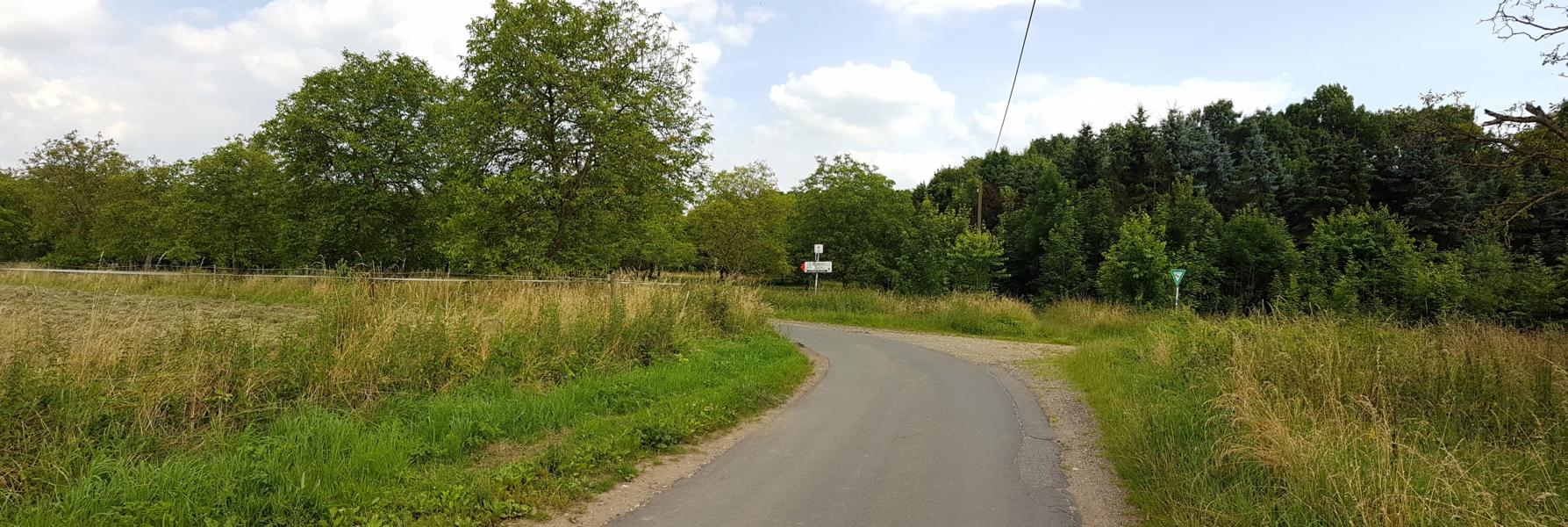 Wir kommen an eine Weggabelung und folgen der asphaltierten Straße nach links. Auch hier sehen wir rechts und links Nussbäume.
